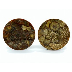 Ammonite mosaic circle 115 * 115 * 7mm.