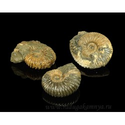 Mineral ammonite untreated 55 * 45 * 25mm-110 * 70 * 45mm, 65-200gr.