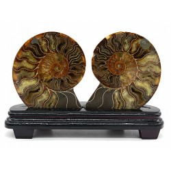 Ammonites cut of 2 halves on a stand 285 * 80 * 185mm.